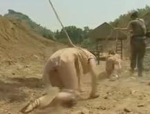 戦場で敵に捕らえられて拘束され陵辱の性奴隷調教される囚人たち!【SM無料動画】